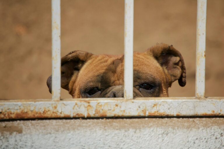 Pets and the Law - Who Gets The Dog?